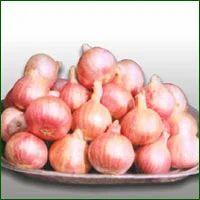 Onion Seed- N-2-4-1