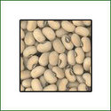 Cow Pea Seed Research