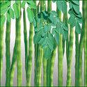 Drumstick Seed - Amar 32
