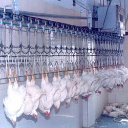 Conveyorized Poultry Dressing Or Slaughter Plant