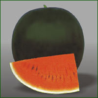 Water Melon Seed - Sweetoo Black (Hybrid)