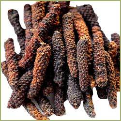 Piper Longum / Long Pepper