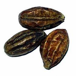 Terminalia Chebula