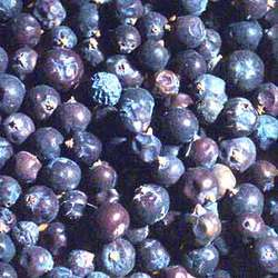 Medicinal Juniper Berries