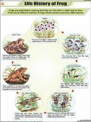 Meiosis History | RM.