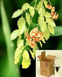 Pterocarpus Marsupium Extract