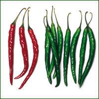 Chilli Seed- Sangam (HYBRID)