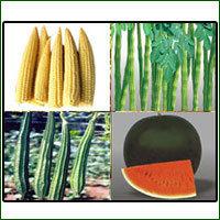 Existing Vegetable Seed