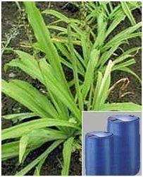 Chlorophytum Borivilianum Extract