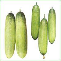 Cucumber Seed- Laxmi ( Hybrid)