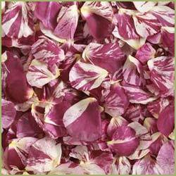 Rosa Damascena Mill / Dried Rose Petals