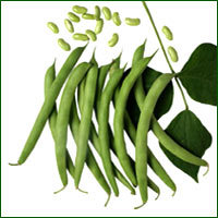 French Bean Seed - Vijay