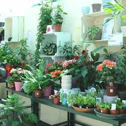 Garden Plant Find Wholesale Price For In India
