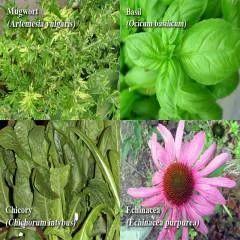 Medicinal Plants औषध य प ध In Jubilee Hills Hyderabad Pragati Green Meadows Resorts Private Limited Id 1211167588